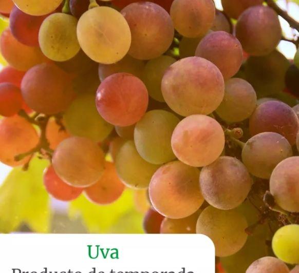 Smothie de uvas, piña y espinacas